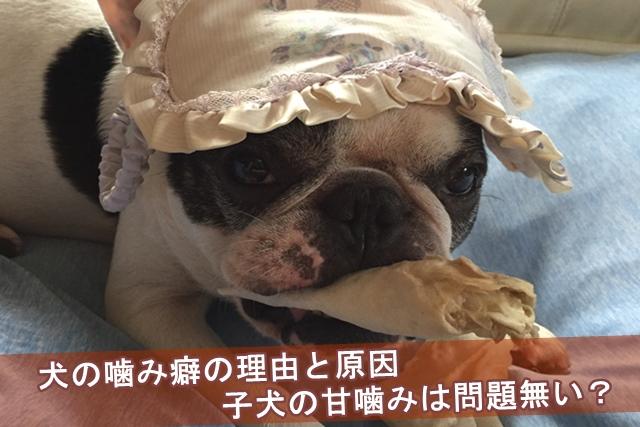 犬の噛み癖の理由と原因