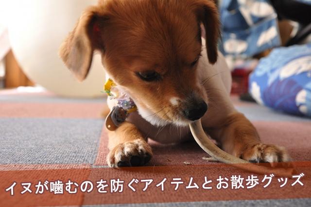 イヌが噛むのを防ぐアイテムとお散歩グッズ