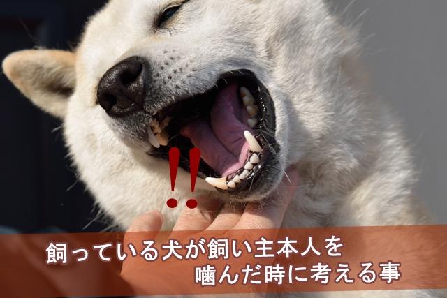 飼い犬に噛まれた時に考える事