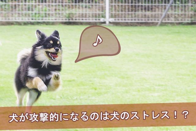 犬が攻撃的になるのは犬のストレスか