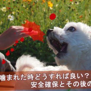 犬に噛まれた時の安全確保とその後の行動