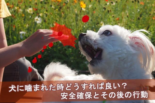 犬 に 噛ま れ たら 何 科 犬に噛まれた!ズキズキする。傷の治し方は?病院に行かないと危険?