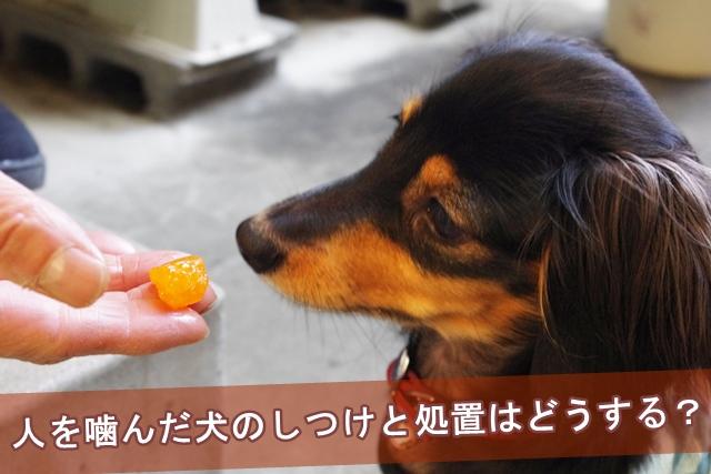 人を噛んだ犬のしつけと処置はどうするのか