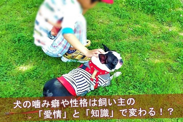 飼い主の愛情と知識で変わる犬の噛み癖や性格