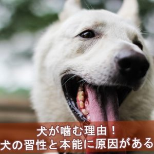 犬が噛む理由は犬の習性と本能が原因