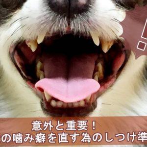 犬の噛み癖を直す為のしつけ準備