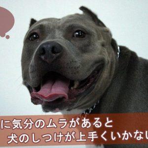 飼主に気分のムラがあると犬のしつけが上手くいかない