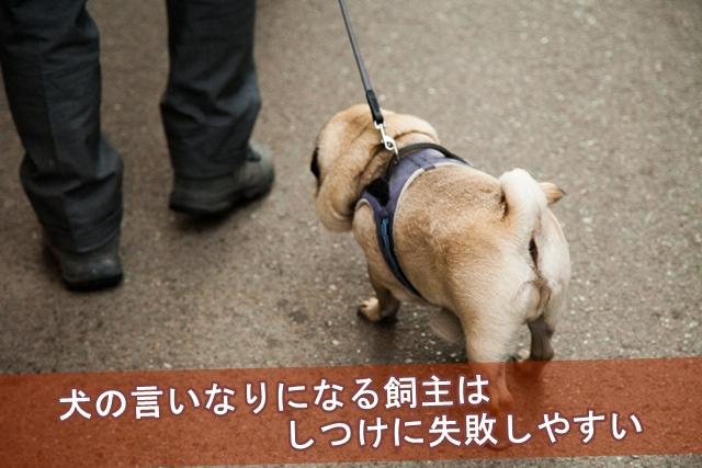 犬の言いなりになる飼主はしつけに失敗しやすい
