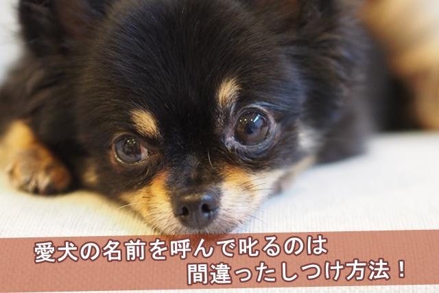 愛犬の名前を呼んで叱るのは間違ったしつけ方法