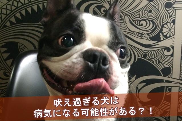 吠え過ぎる犬は病気になる可能性がある