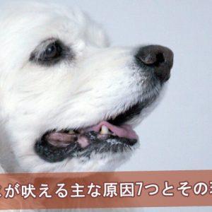 イヌが吠える主な原因7つとその理由