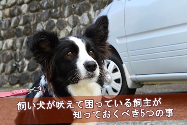 飼い犬が吠えて困っている飼主が知っておくべき事